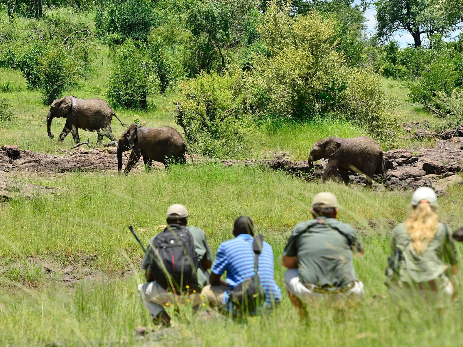 safari-a-pied-dos-2-afrique-du-sud-decouverte