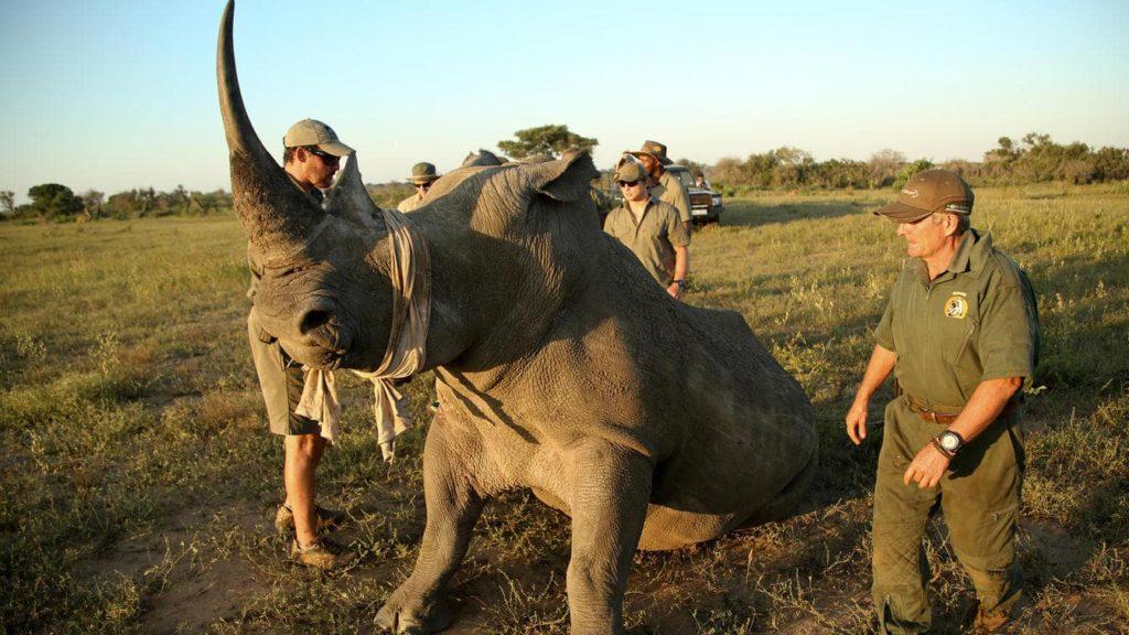 luxe-rhinoceros-andbeyond-phinda-afrique-du-sud-decouverte