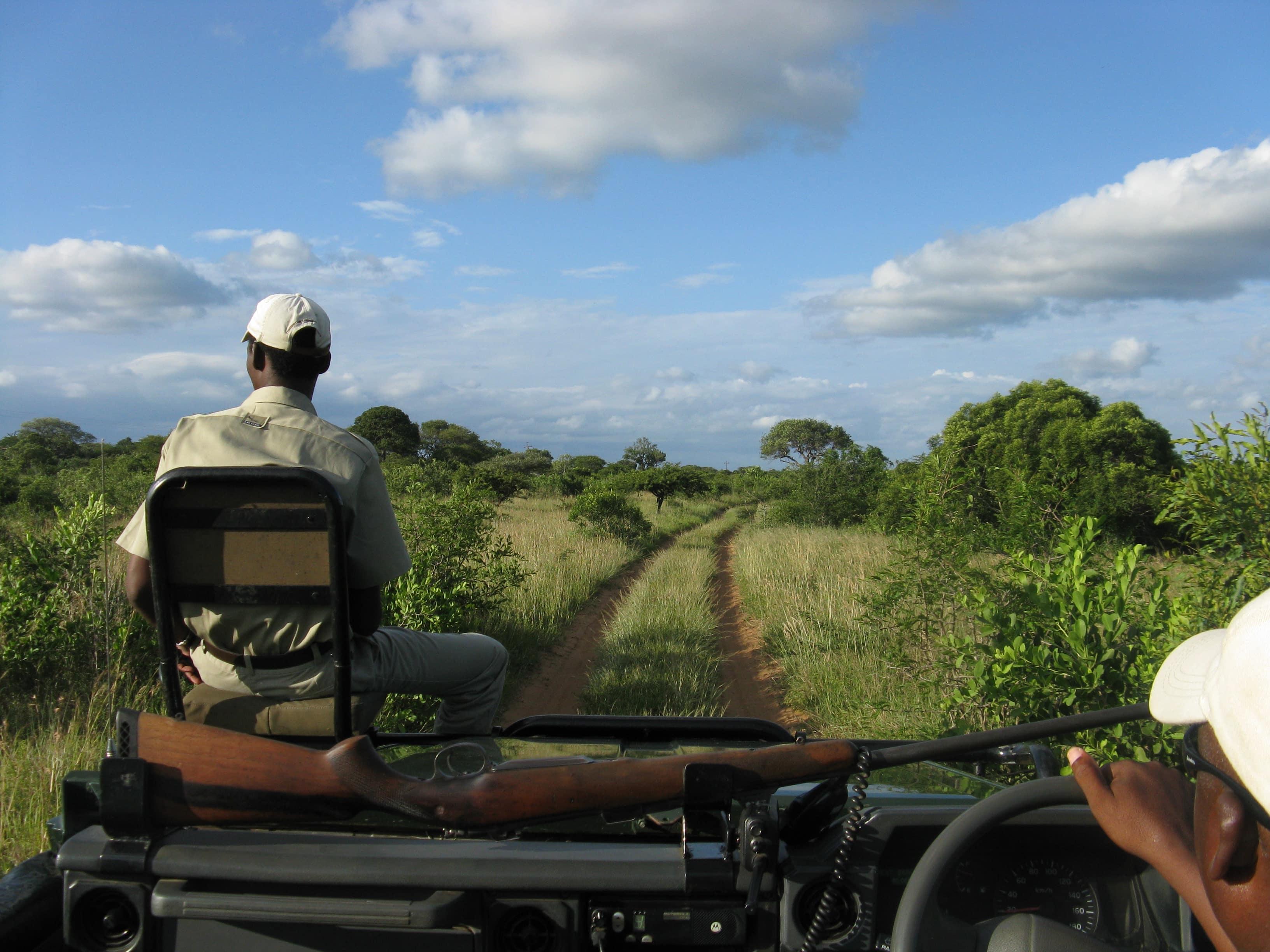luxe-rhinoceros-phinda-afrique-du-sud-decouverte